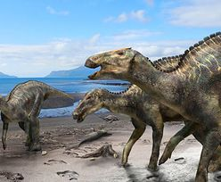 Nowy gatunek dinozaura. Japończycy odkryli szczątki