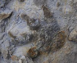Klify w Sussex zawaliły się, odsłaniając prehistoryczną tajemnicę