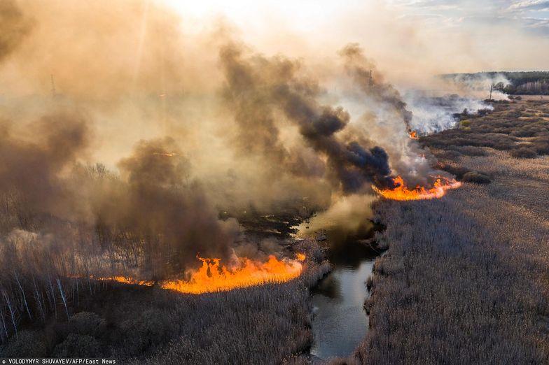 Ogień wdziera się do Czerwonego Lasu