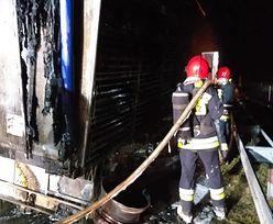 Gorzów Wielkopolski (Lubuskie). Zwierzęta płonęły żywcem na drodze S3