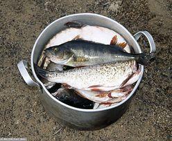 20 ton mrożonej ryby miało iść na przemiał. Jest interwencja rzecznika MŚP