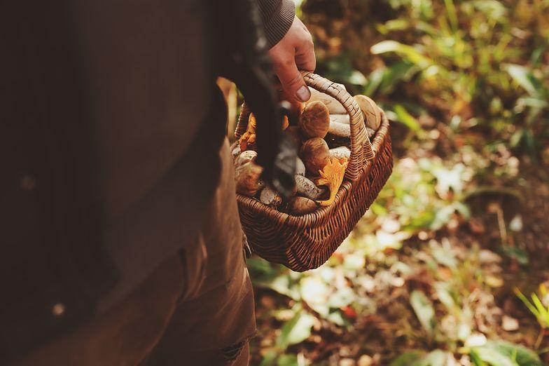 grzyby las pomorskie